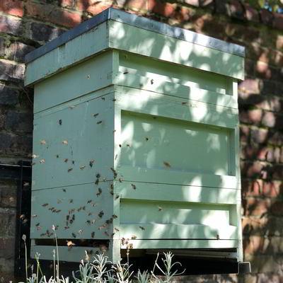thebalms-beehive